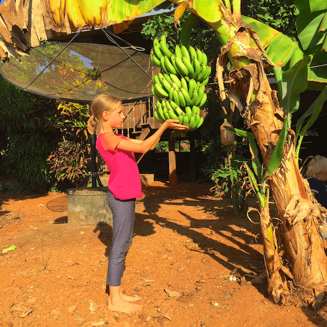 Maya and banana rack