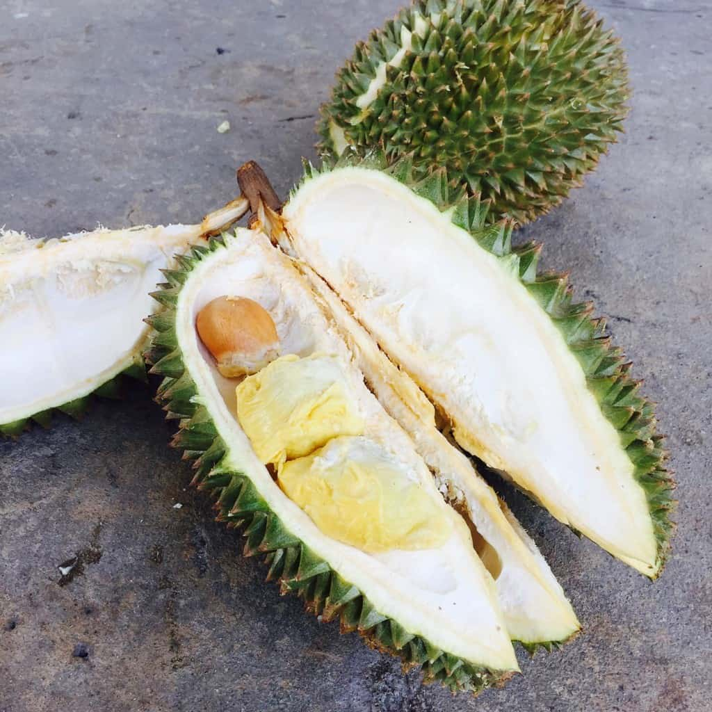 durian - 13