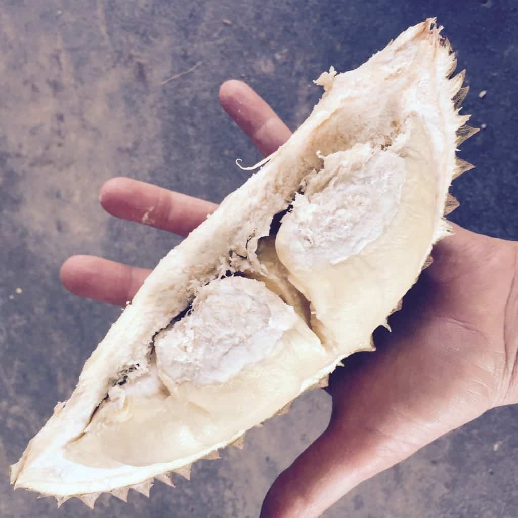 durian2 - 5